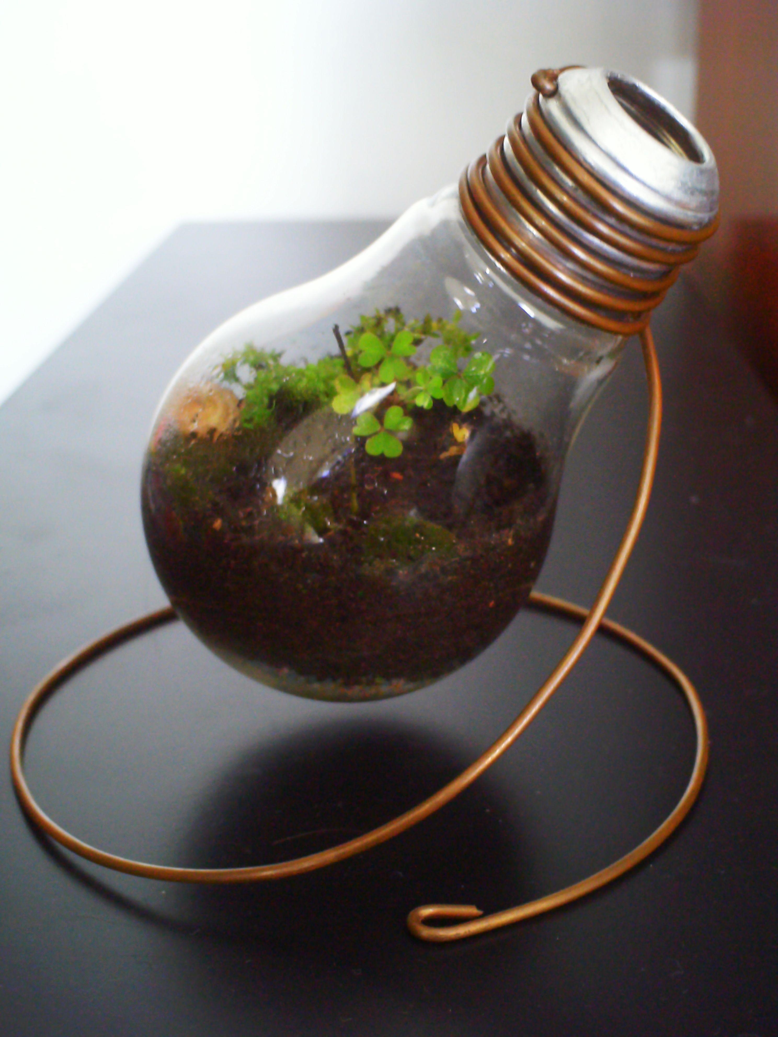 Light Bulb Terrarium Lijmpistool Knutselen Gloeilampen
