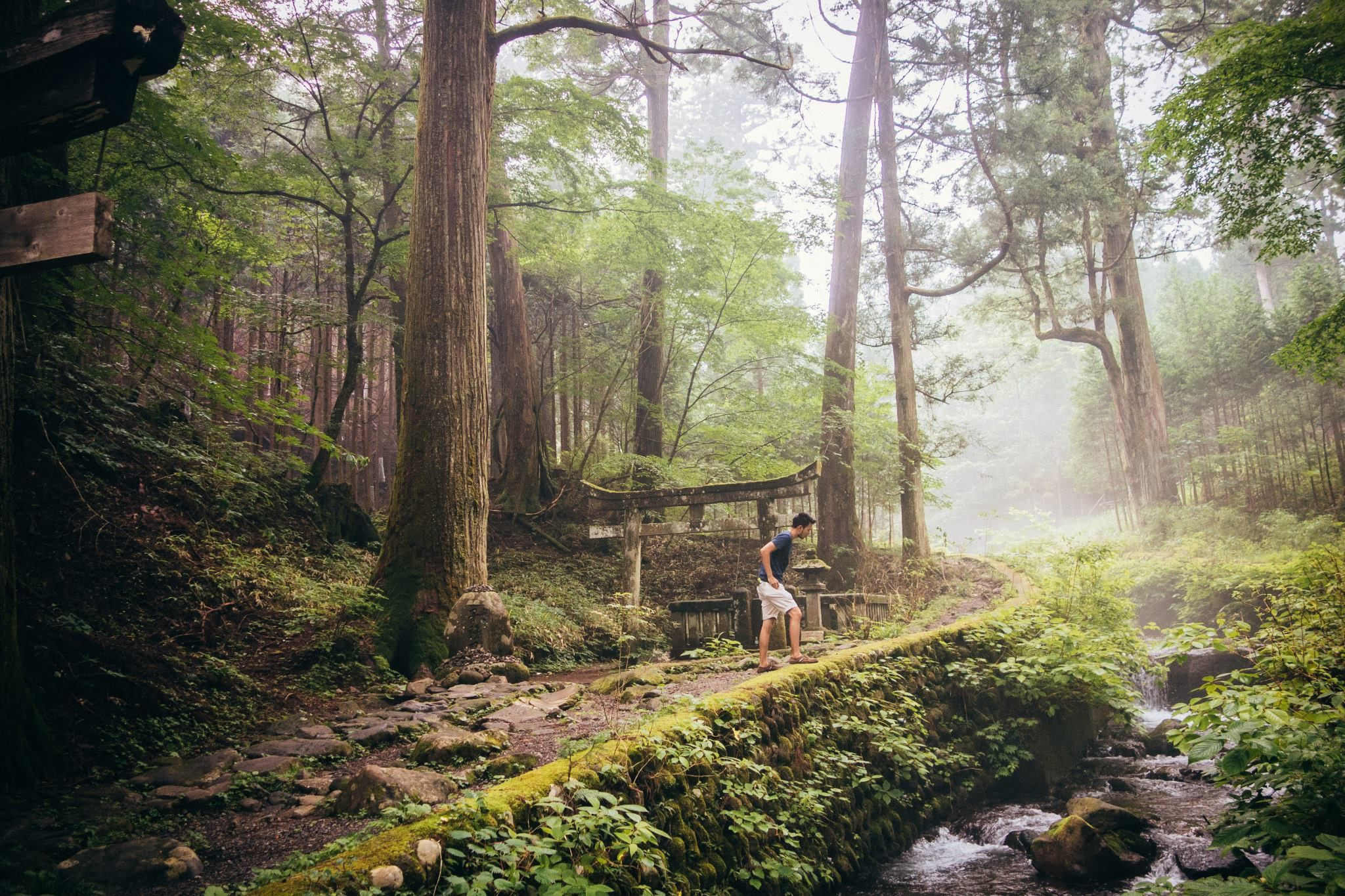 japanese forrest - Google Search