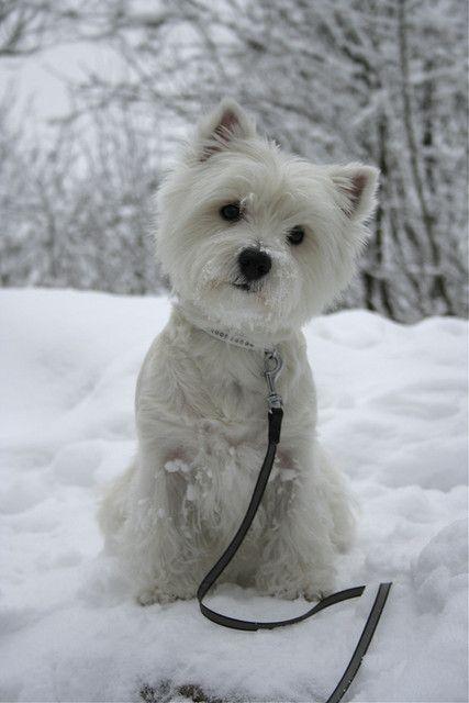 Lumironja2 Cute Animals Cute Dogs Cute Puppies