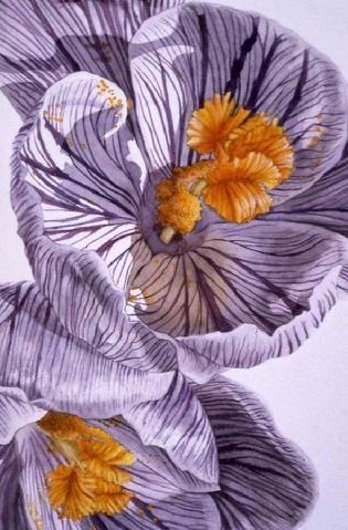 Susan T. Fisher | Botanical art, Nature illustration ...