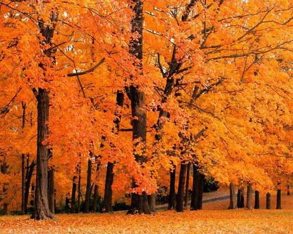 21 Spectacular Autumn Vistas Fall Wallpaper Fall Desktop Backgrounds Fall Pictures