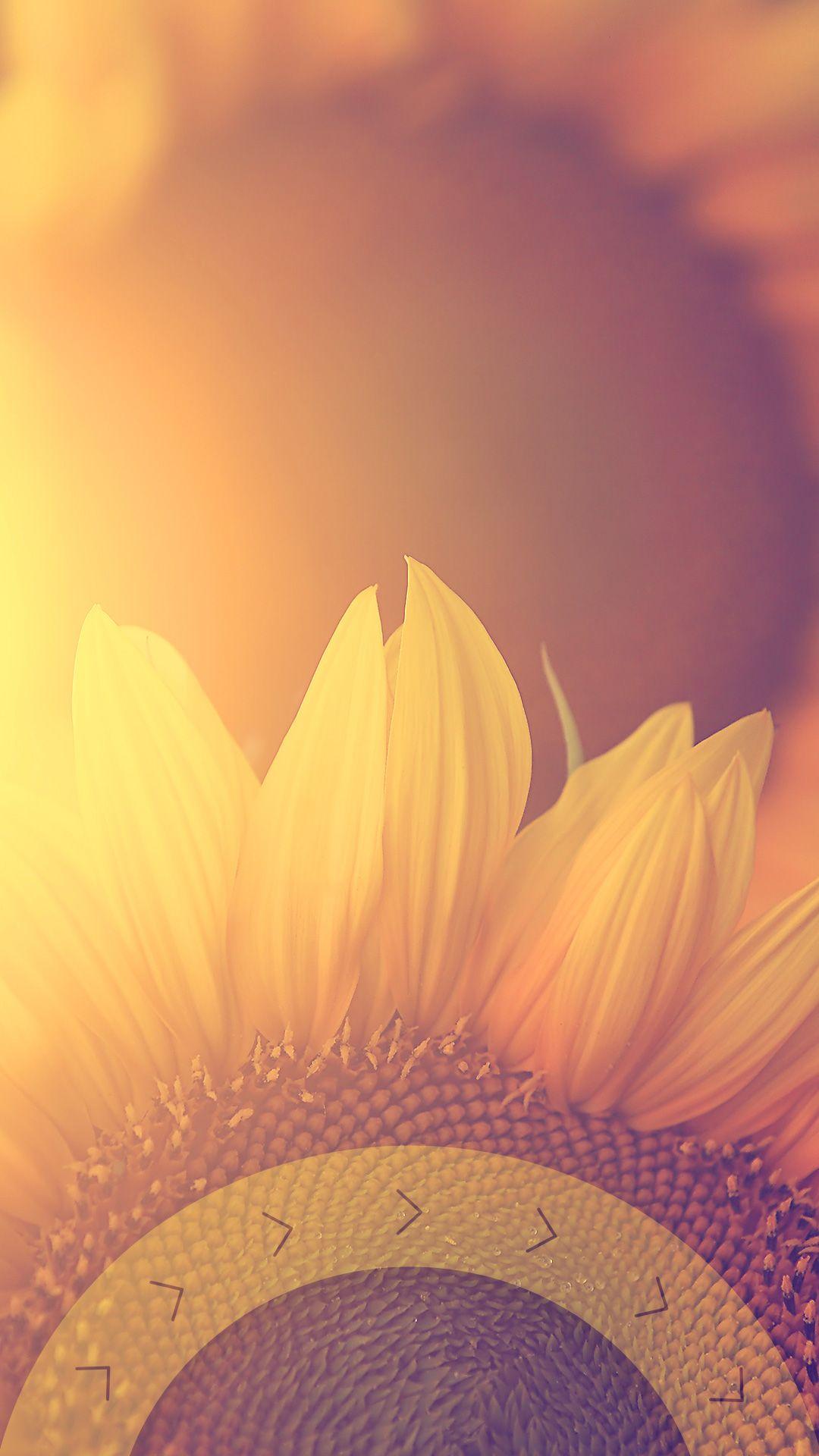 ↑↑TAP AND GET THE FREE APP! Lockscreens Art Creative Sun Flower Summer HD iPhone 6 Plus Lock Screen