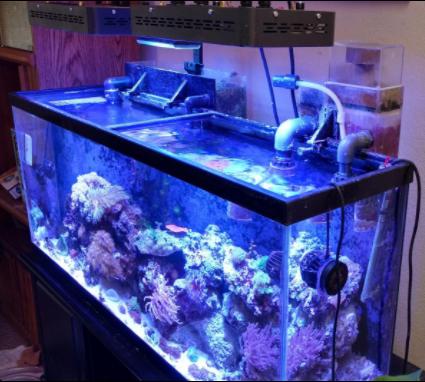 2x marsaqua 165w led aquarium light full spectrum bright lighting