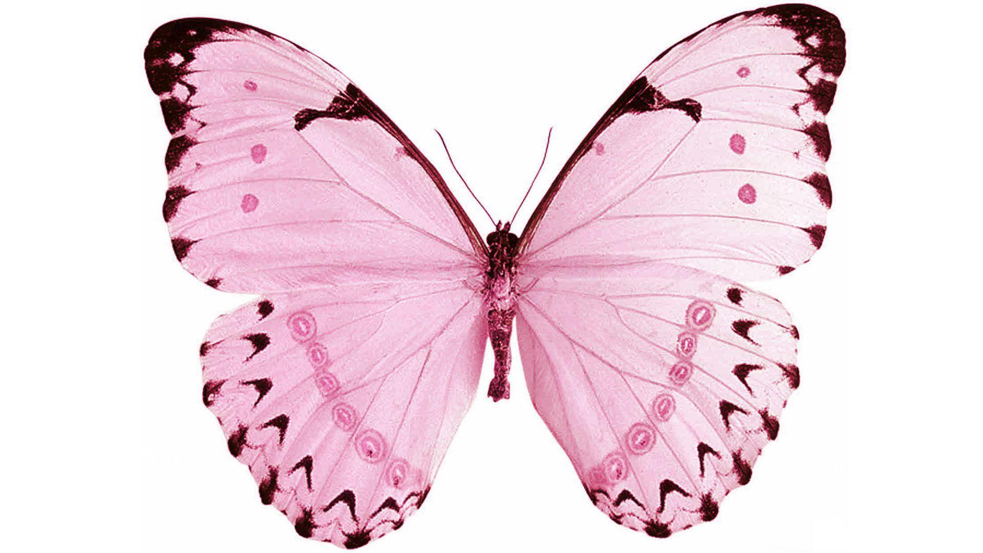 Pin By Gabi Negoescu On Tutorial Template Pink Butterfly Butterfly Art Painting Butterfly Wallpaper
