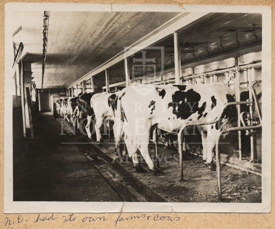 Inside Gothic Dairy Barns Bing Images Barn Pinterest