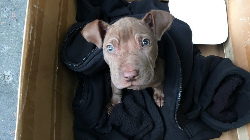 Petition Auckland Council Savechip Change Org Chip Was Once An Abandoned Puppy Thrown Into A Garbage Bin Now That He Has B Puppy Find Dog Mommy Puppies