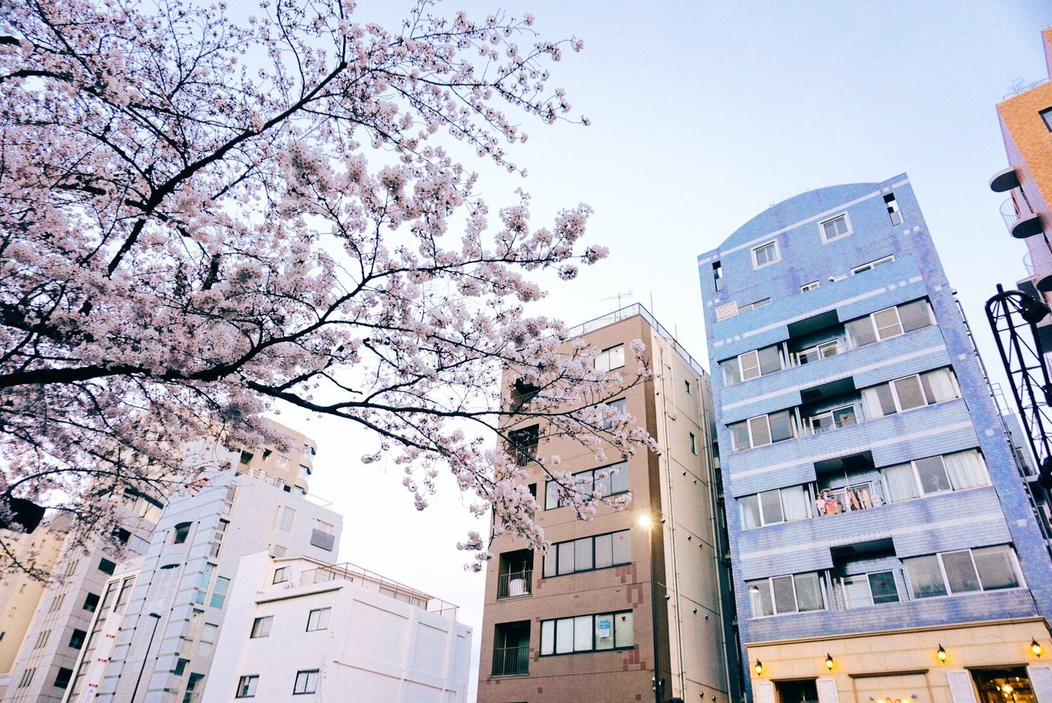 The Best Places To See Cherry Blossoms In Tokyo Japan The Sunday Spritz Aesthetic Japan Tokyo Cherry Blossom