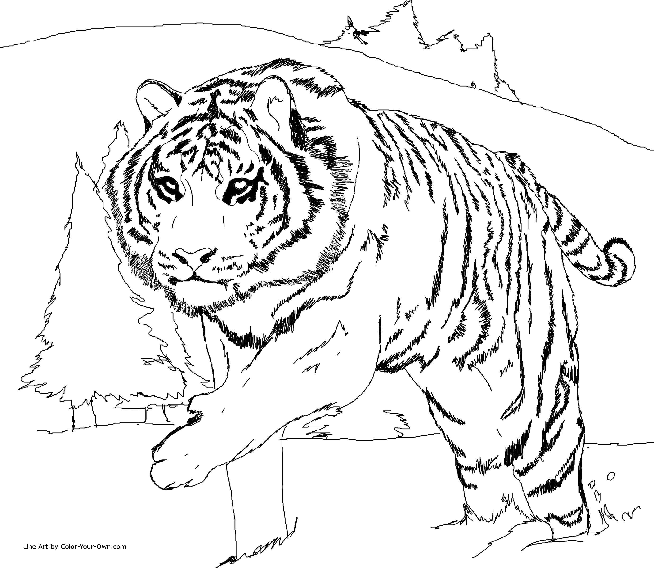Dessin Animaux Tigre Sensationnel Construction Dessins De Coloriage