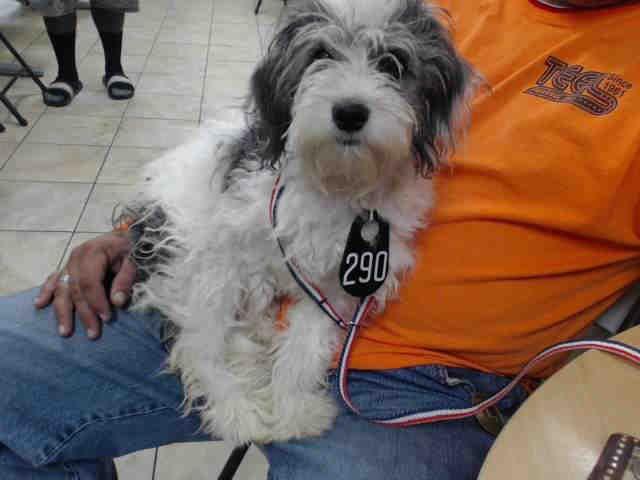 Texas Animal Shelter This DOG IDA514182 I am a female