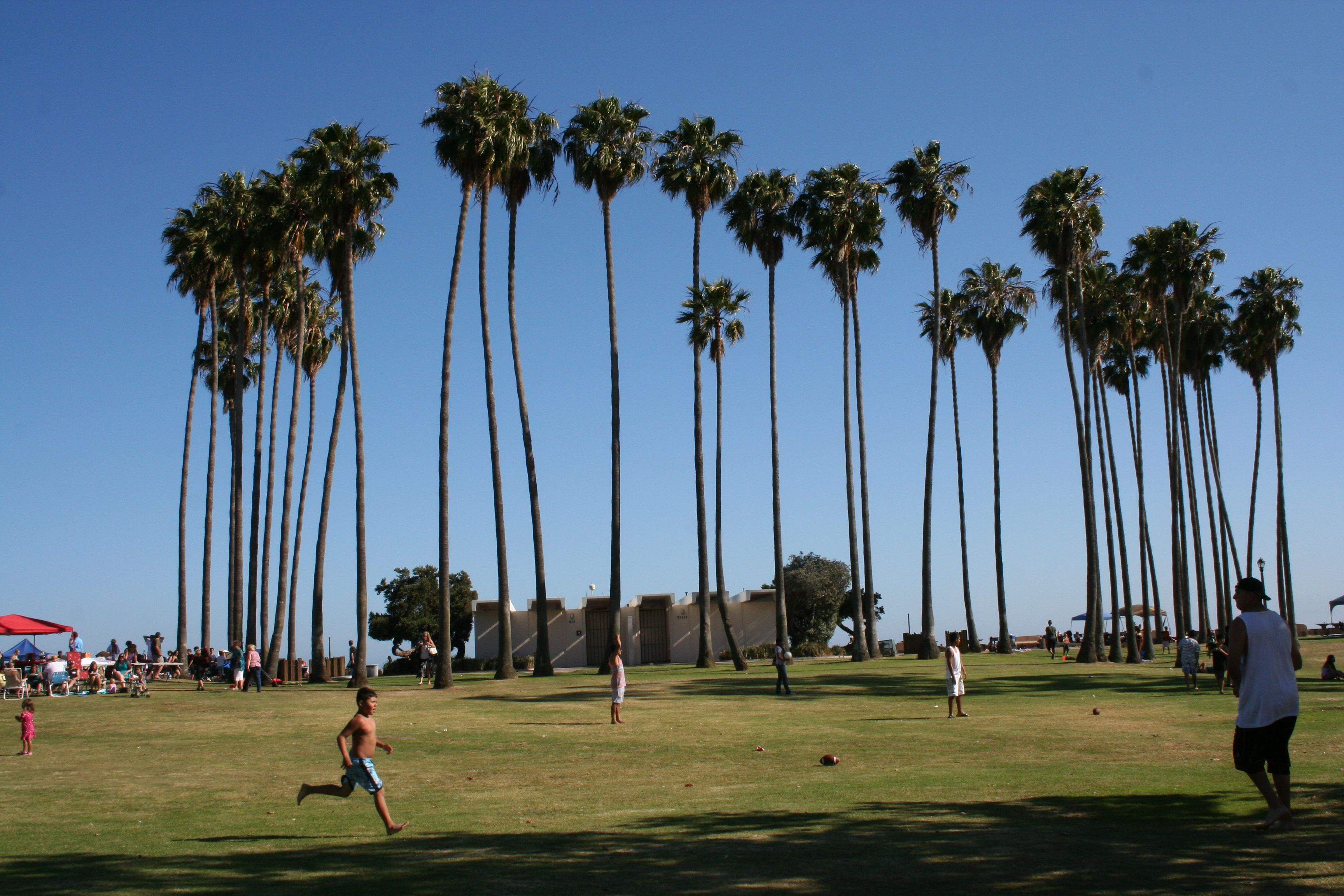 Doheny beach palm trees dana point ca cityofdanapoint