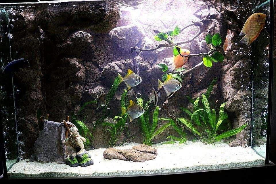 Gollum tank aquarium #tabalkonfon #tabalkonmalawi #tabalkonaqua #tanganyikatank  #cihclids #aquarium #akvaryumfon #akvaryum #tasarım #tanganyika #aquascape #aqua #fishporn #fishing #handmade #handscaping #elişi #dizayn #evdizayn #tasarım #interiordecoration #malawicichlids #malawifon #freshwater #freshwateraquarium #customaquariums #custombackground  #bigaquarium #decoration #bigfishtank #dekorasyon