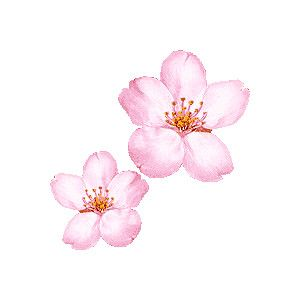 Cherry Blossom Sakura Clipart Free Clip Art Cherry Blossom Painting Cherry Blossom Watercolor Watercolor Flowers
