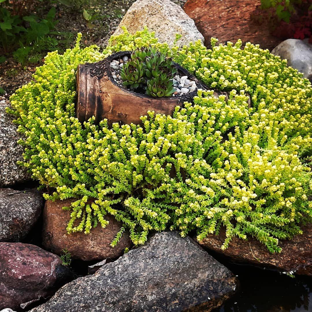 Grun Stein Steingarten Unkraut Wasser Bachlauf Bepflanzen Garten Gartengestaltung Sukkulenten Hauswurz Gartengestaltung Garten Steingarten