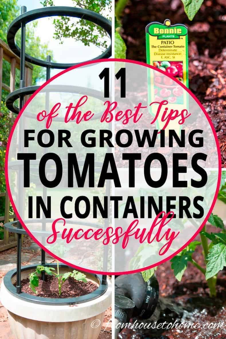 11 Of The Best Tips For Growing Tomatoes In Containers 400 x 300