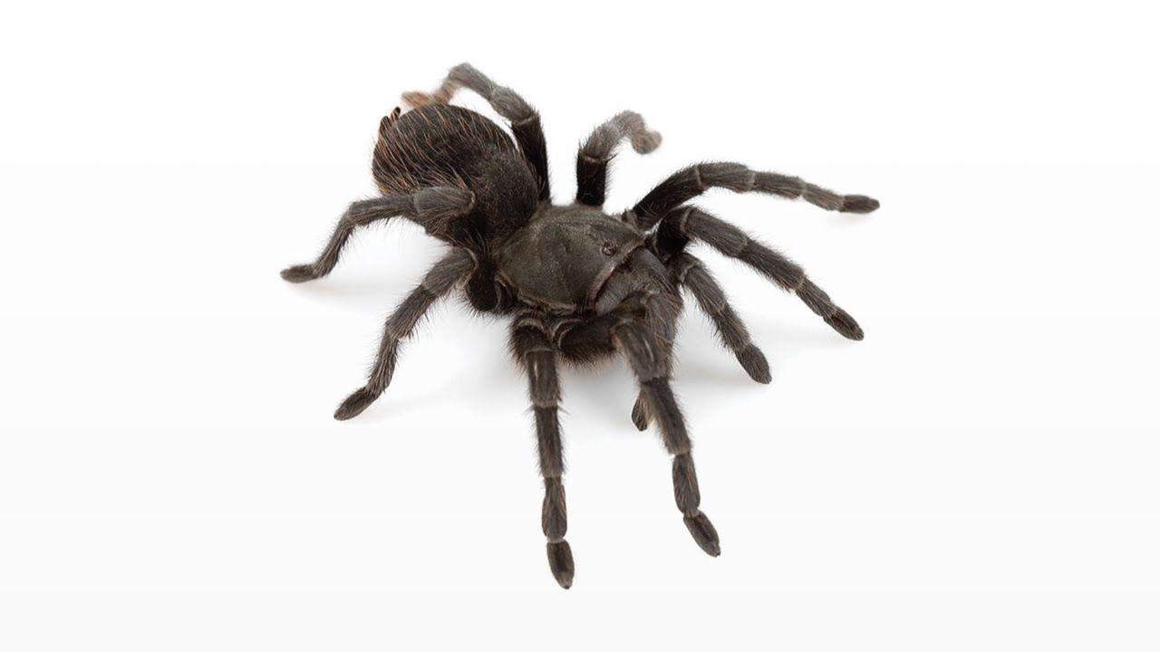 Woher die Angst vor Spinnen kommt