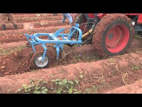 Hilling Potatoes Growing A Vegetable Garden Youtube