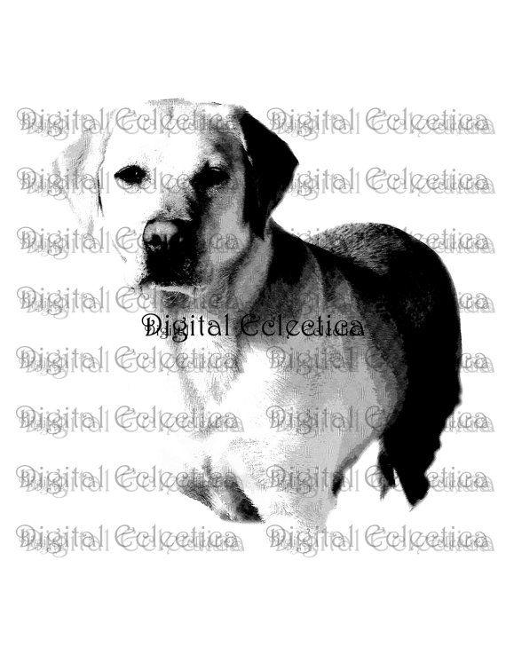Labrador+Retriever+Dogs.+Labrador+Dog+Prints.+by+DigitalEclectica,+$2.99