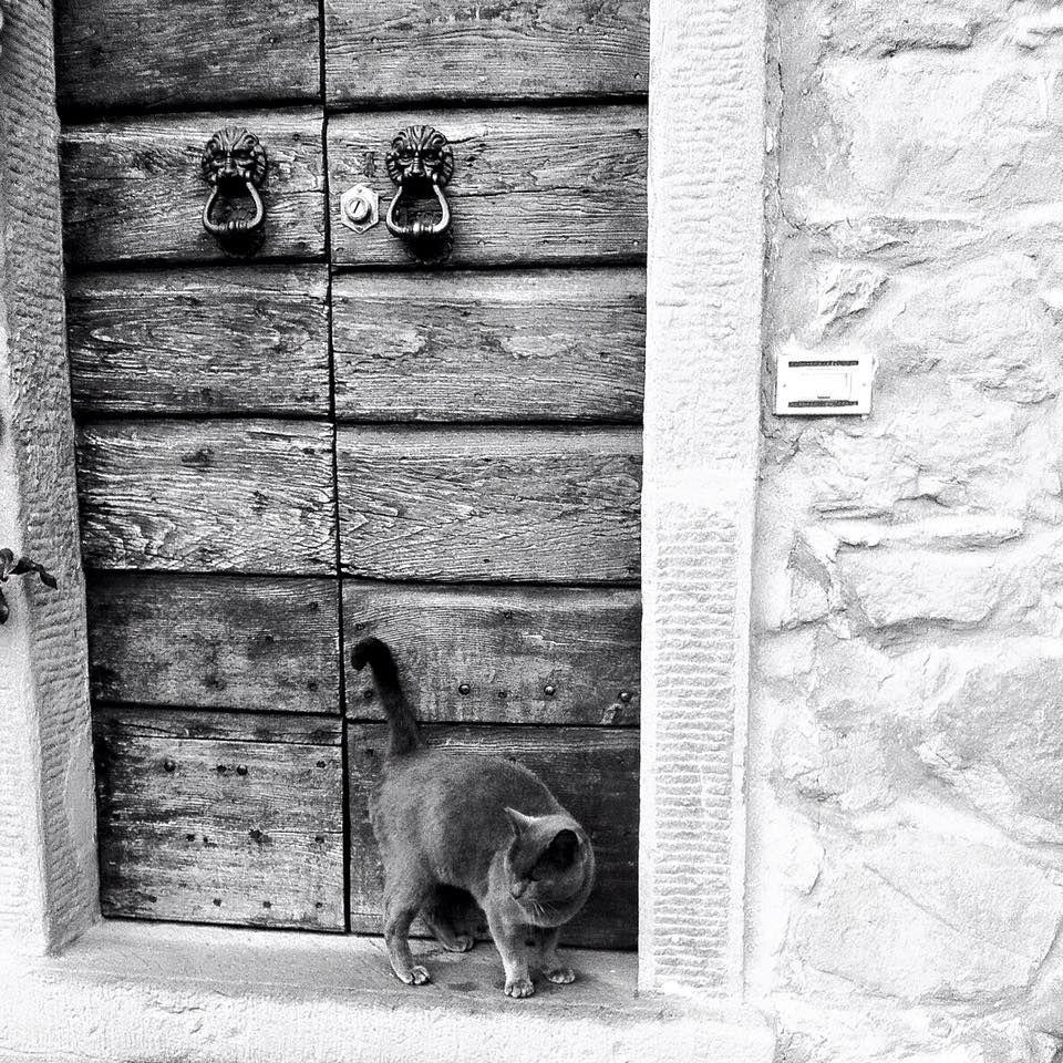 Di seguito una selezione delle nostre porte, finestre e persiane !  Guardatene di altre nel nostro sito:  www.casadelserramento.it #casadelserramento #firenze #porte #finestre #persiane