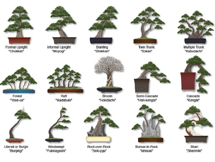 Bonsai Trees Various Styles Of Creation W Anese Names