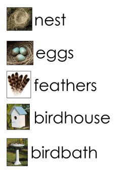 Included are 20 images and words to use with a bird or spring time unit.  I love using life-like images with my students.  Enjoy this beautiful spring time!