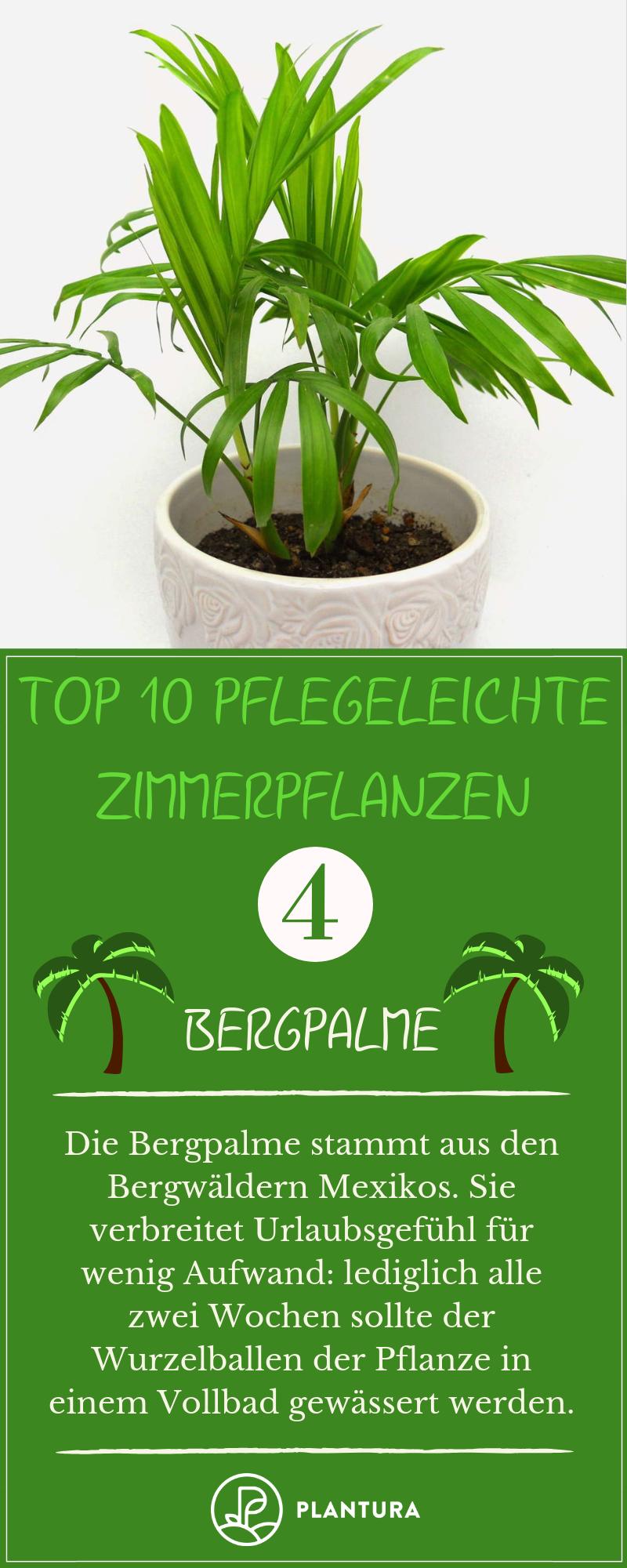 Die 10 Besten Pflanzen Fur Drinnen Plantura Pflanzen Coole Zimmerpflanzen Zimmerpflanzen