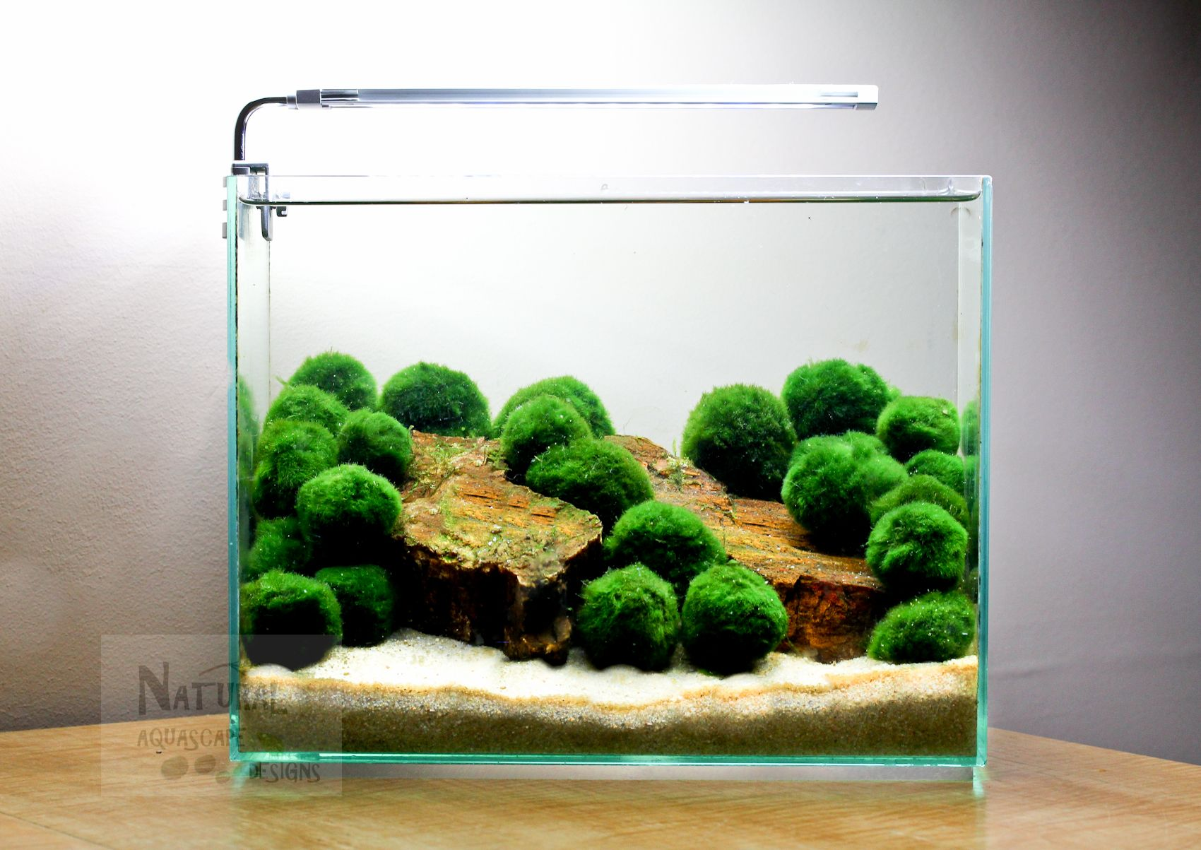 Marimo are the easiest way to add a splash of green to for Betta fish moss ball