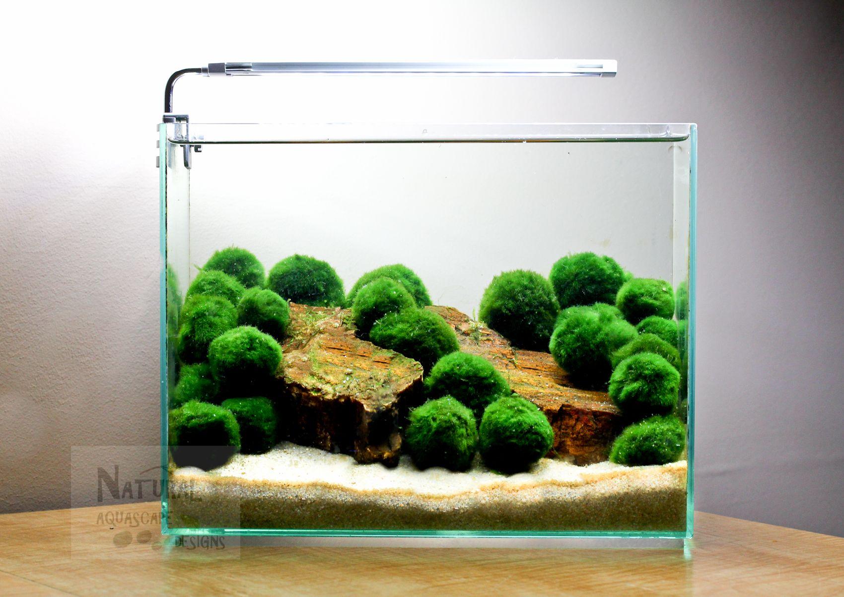 Marimo Ball Aquascape | Aquascaping | Pinterest | Aquarium, Pflanzen ...