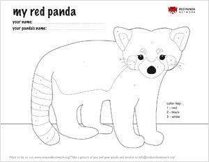 Color Your Red Panda Red Panda Panda Craft Panda Activities