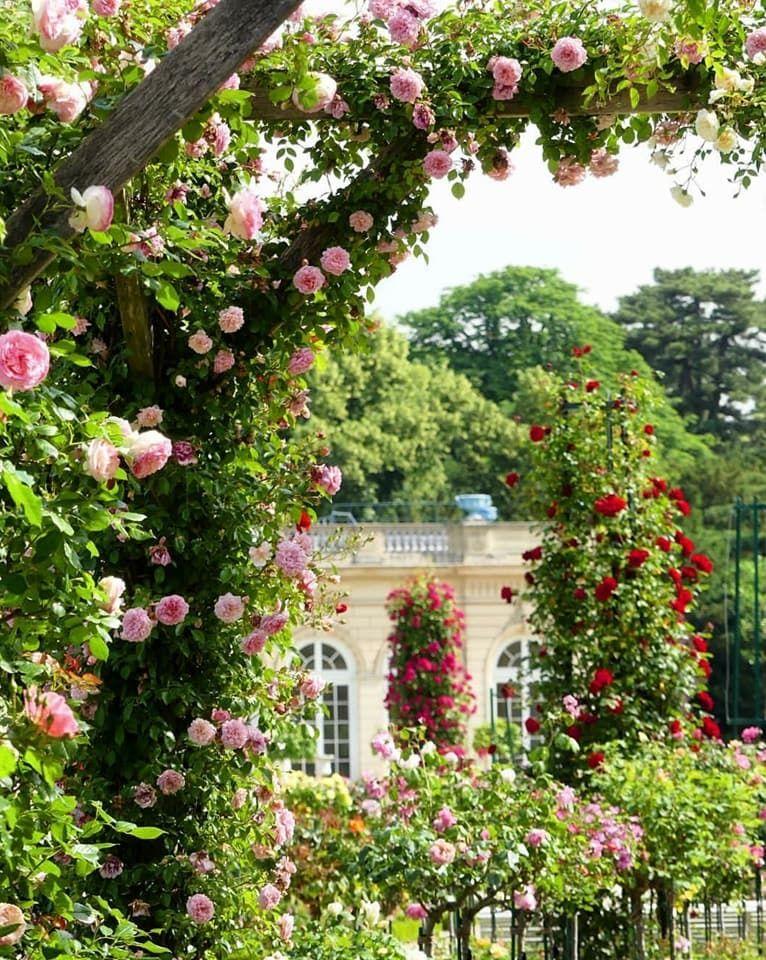 Pin By Soni Cassell On Garden Rose Garden Design French Garden Flower Field