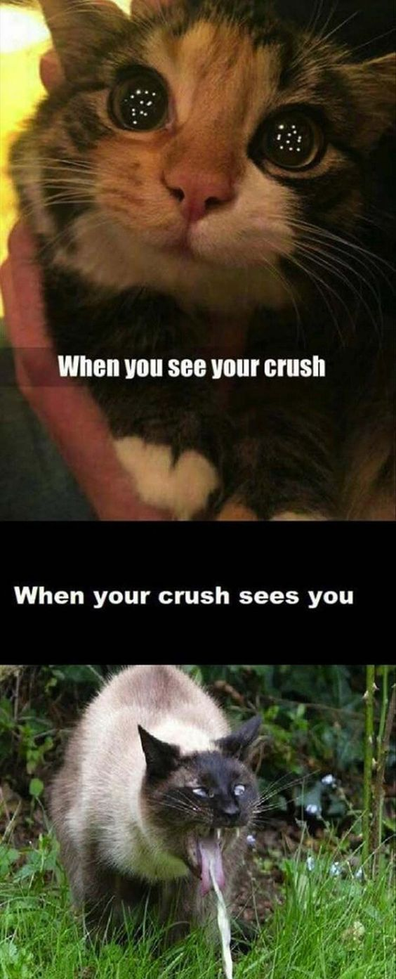 28 Hilarious And Funny Cat Memes That Are Cute Clean Laugh So Hard Funny Animal Memes Funny Cat Memes Animal Memes Clean