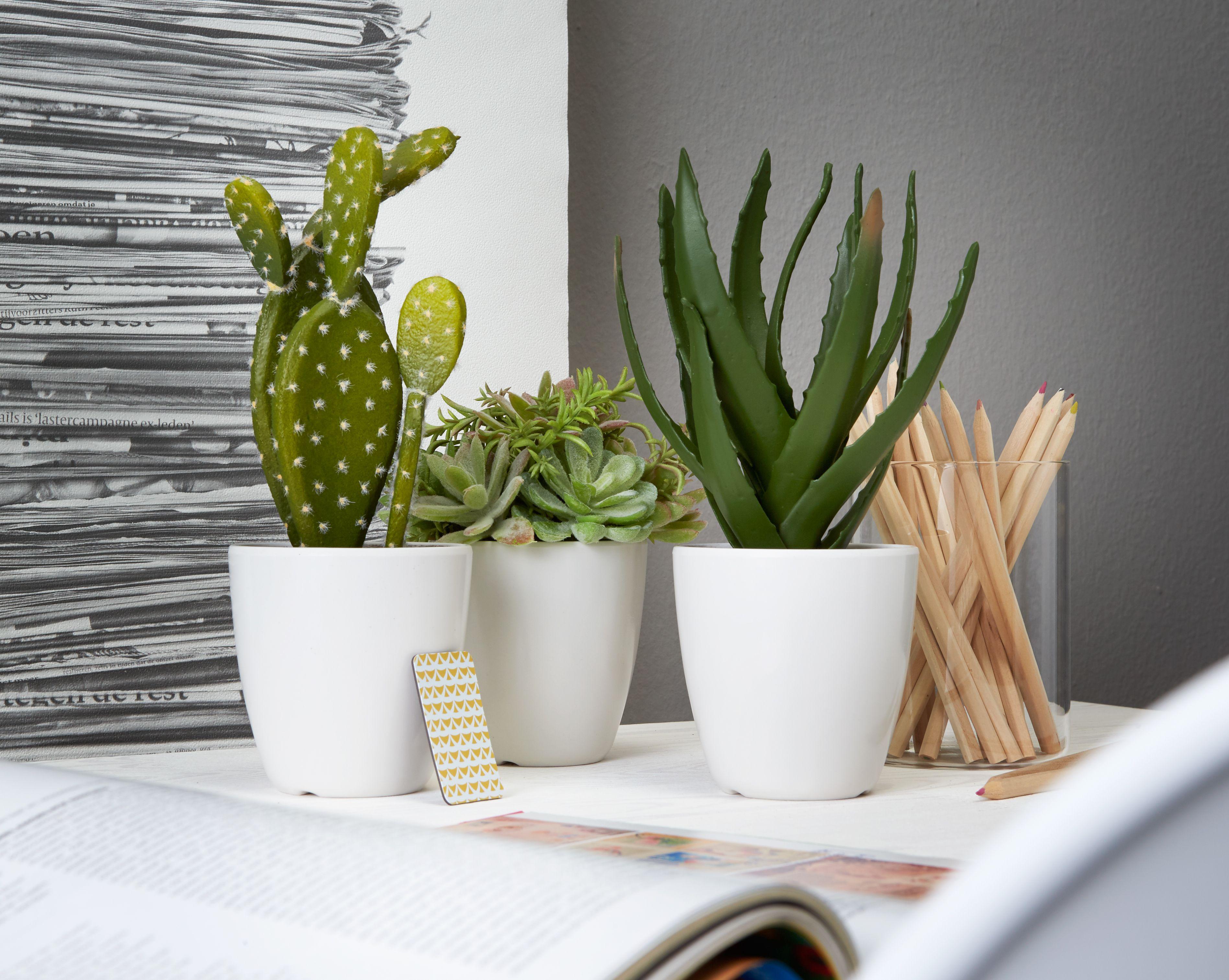 c1e8d5435d1b09a37fc1eddee846a2cc Ze Cactus Houseplants on cactus names list, cactus at lowe's, cactus cuts on skin, cactus fungus disease cure, cactus garden, cactus identification, cactus tumblr, cactus planting ideas, cactus flowers, cactus name with leaves, cactus black spot disease, cactus night blooming cereus, cactus sprouts, cactus thin fingers, cactus wildflowers, cactus propagation, cactus with white hair, cactus in bloom, cactus plants,