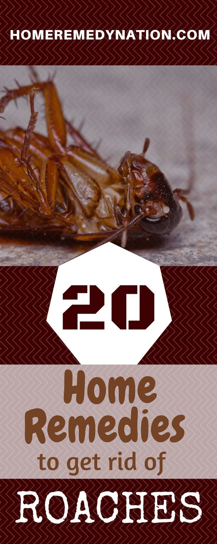 20 simple home remedies to get rid of roaches home