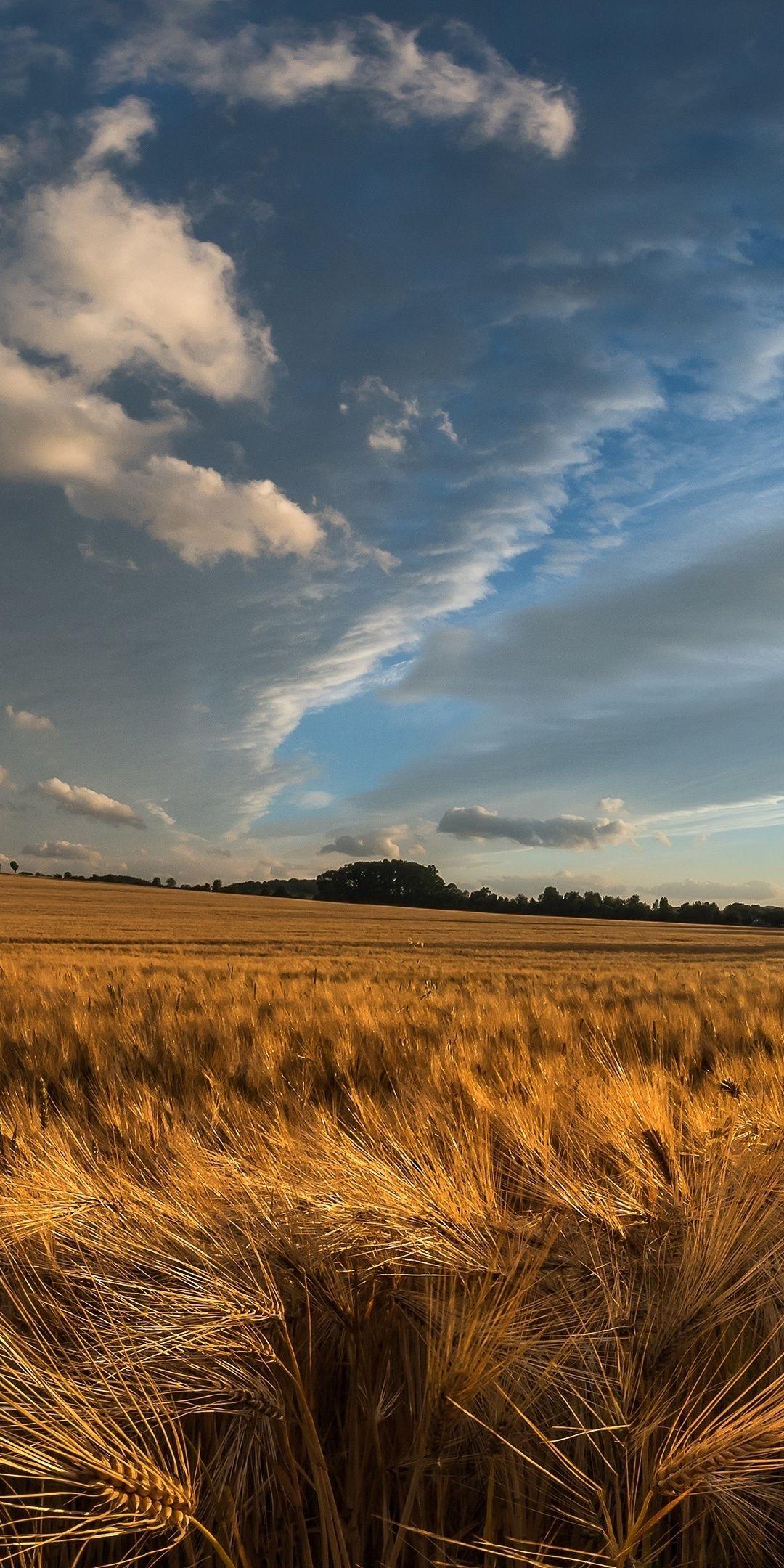 Golden Crop Wheat Farm Landscape Nature 1080x2160 Wallpaper Landscape Countryside Landscape Nature