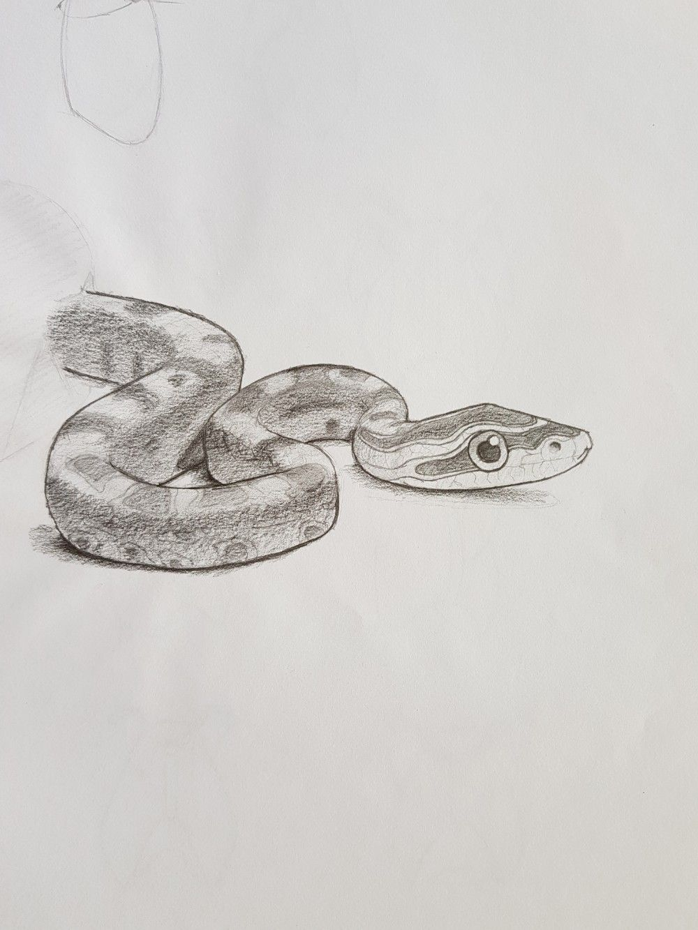 An adorable snake drawing snake drawing cool drawings pencil drawings drawing people