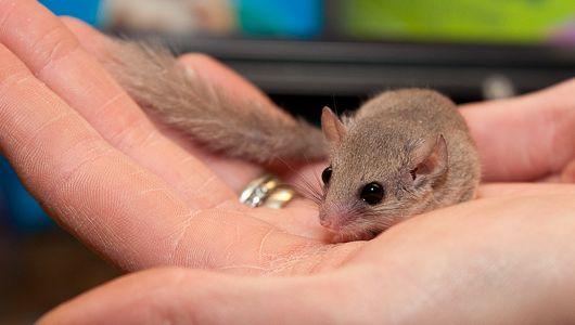 Small Animals Newtonpet Small Pets Best Small Pets Pet Lizards