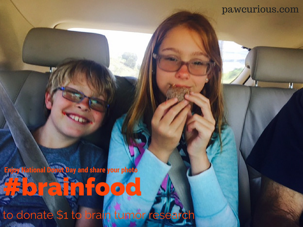 Brain Food   Pawcurious: With Veterinarian and Author Dr. V