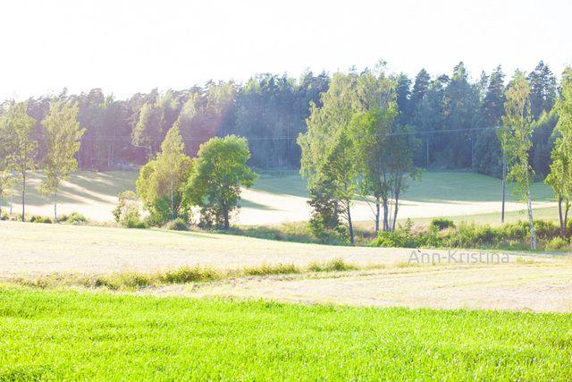 Ann-Kristina Al-Zalimi, summer, heinäkuu, juli, sunshine, field, green, finland, landscape, kirkkonummi, countryside, country, kesä, miasma, maalaismaisema