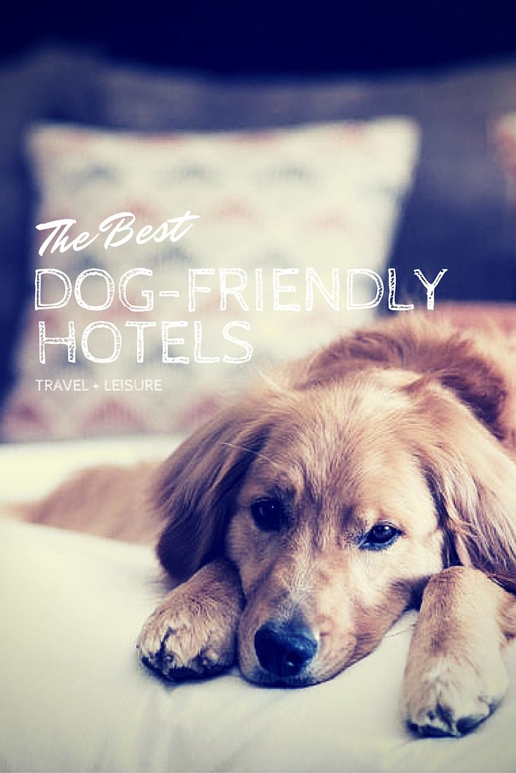 The Best Dog Friendly Hotels In The U S Dog Friendly Hotels Dog Vacations Dog Friendly Vacation