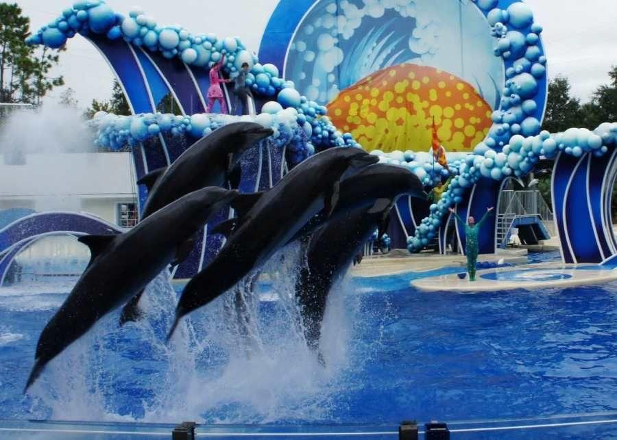 SeaWorld Orlando trip report December 2013 (penguin