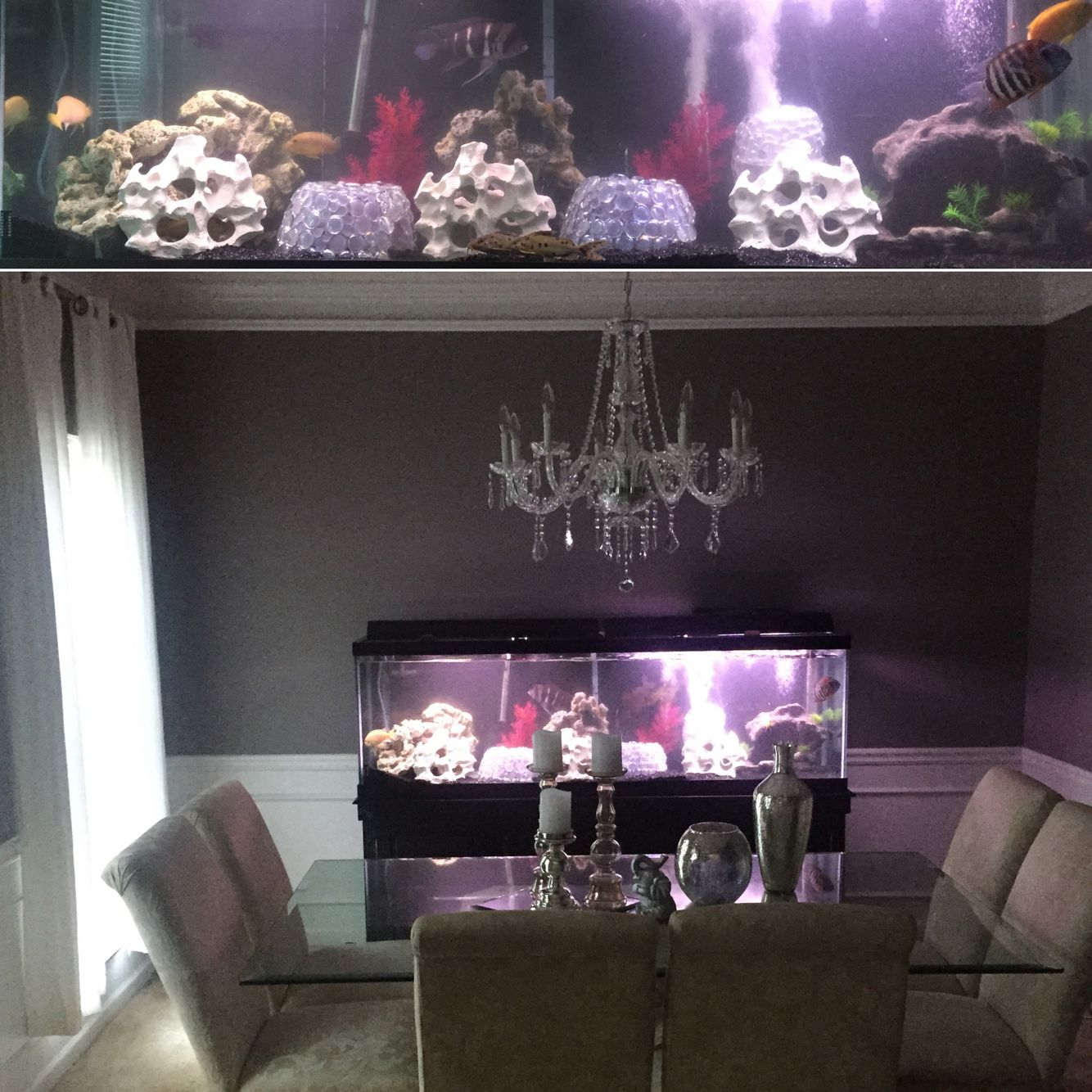 Elegant grey and white dining room with 125 gallon African Cichlid ...