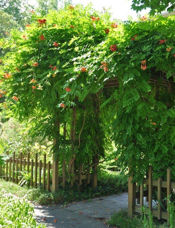 10 plantas trepadoras para cubrir prgolas via Guiadejardin