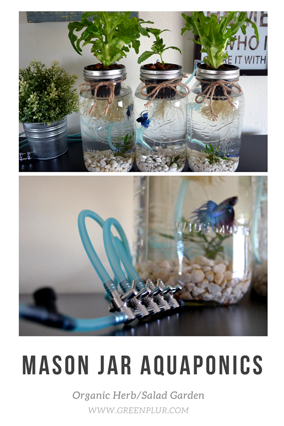 3 mason jar aquaponics kit build your own hydroponics herb garden air control valve controls how much air flows through the air stones to not bother betta fish mason jar aquaponics system with 3 jars and an air pump workwithnaturefo