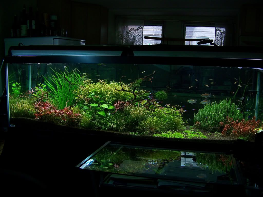 125 gallon planted journal absolutely breathtaking tank for 125 gallon fish tank
