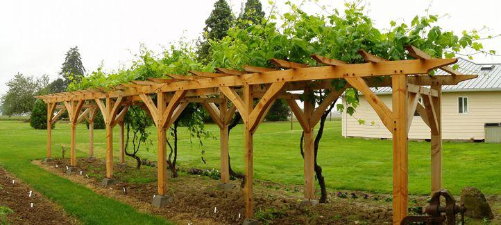 grape pergolas | outdoor rooms garden pergolas vines landscape structures  architectual . - Grape Pergolas Outdoor Rooms Garden Pergolas Vines Landscape