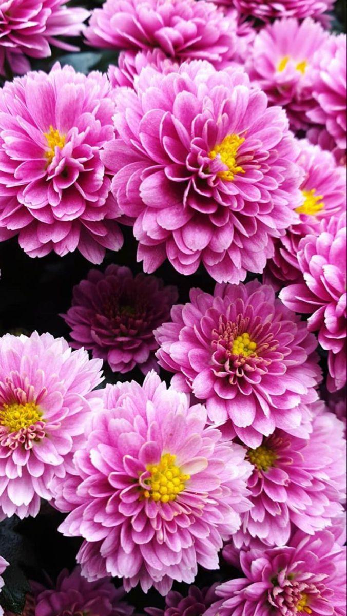 Chrysanthemum In 2020 Wholesale Flowers Arch Decoration Wedding Cherry Blossom Wedding