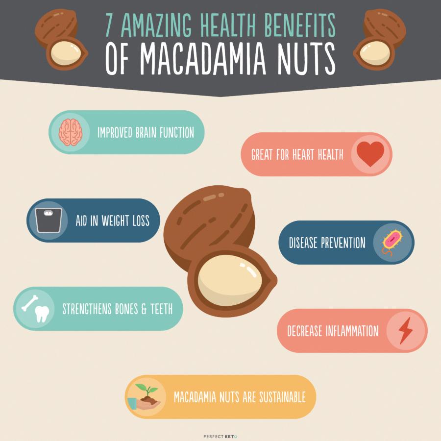 Macadamia Nuts Nutrition 7 Health Benefits Macadamia Nuts Macadamia Nuts Nutrition Macadamia Nut Benefits