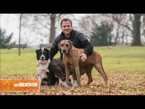 Martin Rutter In Der Ndr Talk Show 04 11 2016 Youtube Hunde Tiere Hund Hundetrainer
