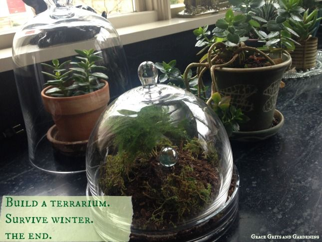 Come along with me while I show you how to build a terrarium and survive the long cold miserable winter! Fun stuff. Promise.