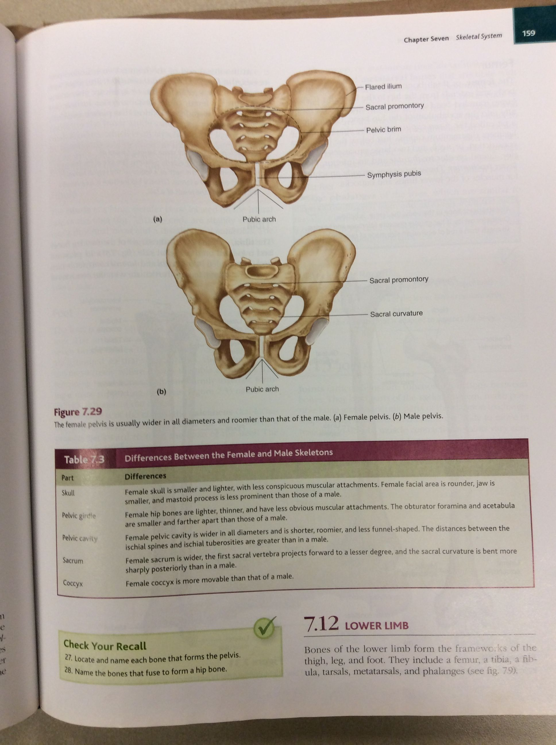 Pin by Sarah Riley on Anatomy and Physiology Male