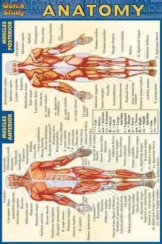 Anatomy Quick Reference Guide Quick Study Anatomy Human Anatomy